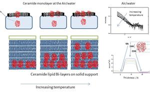 Interaction of nano-gels with artificial membranes