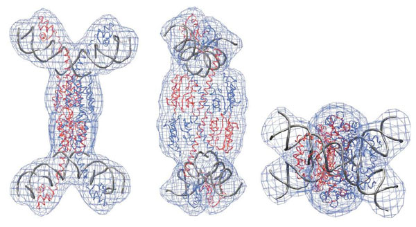 X-synapse solution structure